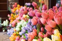 Dutch flowers. A lot of dutch flowers Stock Images