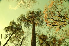 Dutch forest. Autumn Royalty Free Stock Photography