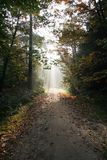 Dutch forest in autumn. Fall Stock Photography