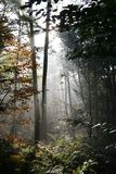 Dutch forest in autumn Royalty Free Stock Photo