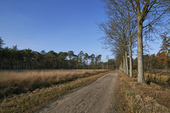 Dutch forest in autumn on a sunny day with blue sky and beautiful sun rays Royalty Free Stock Photo