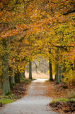 Dutch forest in autumn with a trail Stock Image