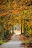 Dutch forest in autumn with a trail. Dutch forest in the autumn with a trail stock image