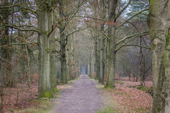 Dutch Forest. A shot of a path in the forest near Lage Vuursche in the Netherlands stock photos