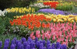 Dutch garden in spring Stock Photo