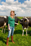 Dutch girl in field with cows Royalty Free Stock Photography
