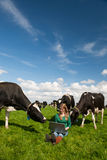 Dutch girl in field with cows Royalty Free Stock Photos