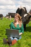 Dutch girl with laptop in field with cows Stock Image