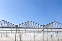 Dutch Green house Stock Image