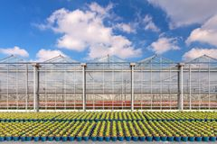 Dutch greenhouse with blue plant pots in front Stock Photography