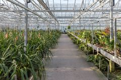Dutch greenhouse with an orchid nursery Stock Photo