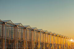 Dutch greenhouse with the sun reflecting in the glass Royalty Free Stock Image