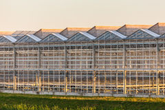 Dutch greenhouse during twilight Stock Images