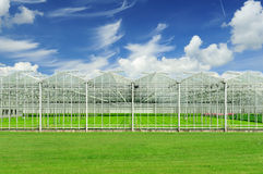 Dutch greenhouse. Whit beautiful sky Stock Photography