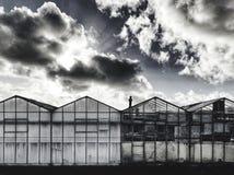 Dutch greenhouses stock photo