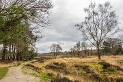 Dutch heather  landscape. Heather  landscape near Wolfheze in the Netherlands Stock Photo