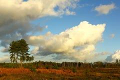 Dutch heathland De treek, leusderhei Stock Photo