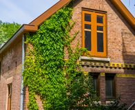 Free Dutch Home With Windows And Ivy Growing On The Wall, Classical Architecture From The Netherlands Stock Photo - 162416980
