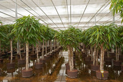 Dutch hydroculture plant nursery Stock Images