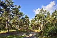 Dutch Island Forest Stock Photo