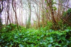 Dutch Jungle in the rain royalty free stock image
