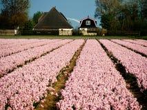 Dutch Landscape Royalty Free Stock Photo