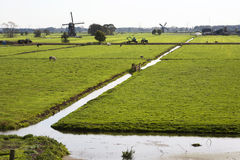 Free Dutch Landscape Royalty Free Stock Image - 45867916