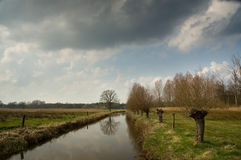 Dutch landscape. With river and weeping willows in spring Stock Photography