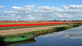 Dutch landscape. A field of red tulips and a canal, typical Dutch landscape Royalty Free Stock Image