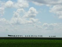 Dutch landscape. Trees moving in the wind, big clouds. Dutch landscape Stock Image