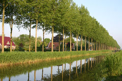 Dutch Landscape. Trees along the water Royalty Free Stock Images