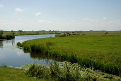 Dutch landscape Royalty Free Stock Image