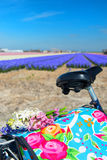 Dutch landscape with bike flower bulbs Royalty Free Stock Photo