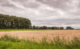 Dutch landscape with a cloudy sky Royalty Free Stock Photo