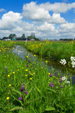 Dutch landscape with ditch Royalty Free Stock Image