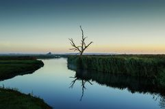 Dutch Landscape, Eempolder Lonely Tree royalty free stock photos
