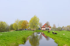 Dutch landscape with farm house Royalty Free Stock Photography