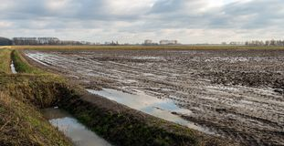 Wet agriculture field. Dutch landscape with a field wet from the rain. The water surface in the ditch and the puddles on the land reflects the cloudy sky Stock Photo