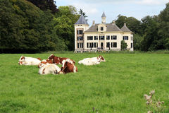 Dutch landscape with mansion and cows Royalty Free Stock Photos