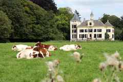 Dutch landscape with mansion and cows Royalty Free Stock Photography