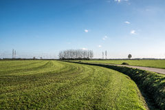 Dutch landscape with meadow ans trees Stock Photo