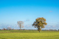 Dutch landscape with meadow and trees Stock Photo