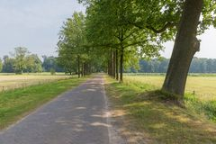 Dutch landscape with paving stone country road and trees Royalty Free Stock Image