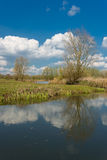 Dutch Landscape with reeds in a pond. Royalty Free Stock Images