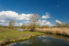 Dutch Landscape with reeds in a pond. Royalty Free Stock Photo