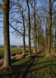 Dutch landscape. With smal trackway Royalty Free Stock Images