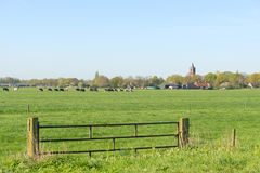 Dutch landscape with small village Royalty Free Stock Photos
