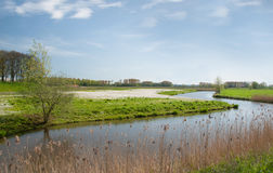 Dutch landscape in springtime Royalty Free Stock Photos