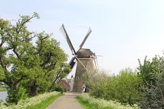 Landscape with corn windmill and Dutch flags,Netherlands  Stock Photo