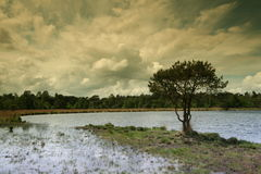 Dutch landscape Tree by the pool1. Dutch landscape, Trees, clouds and water Stock Images